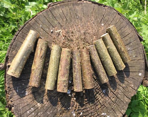 10cm sticks