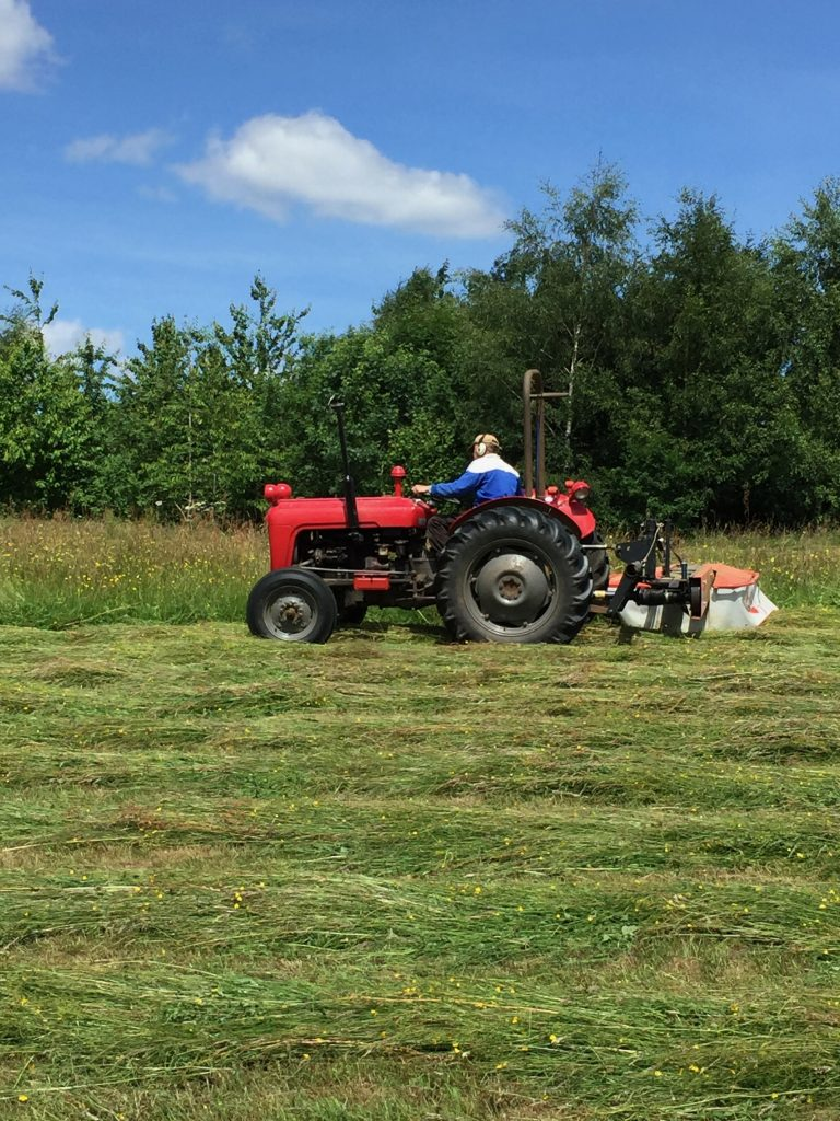 An old tractor with an offset mower is cutting the grass into rows that will dry out for making hay